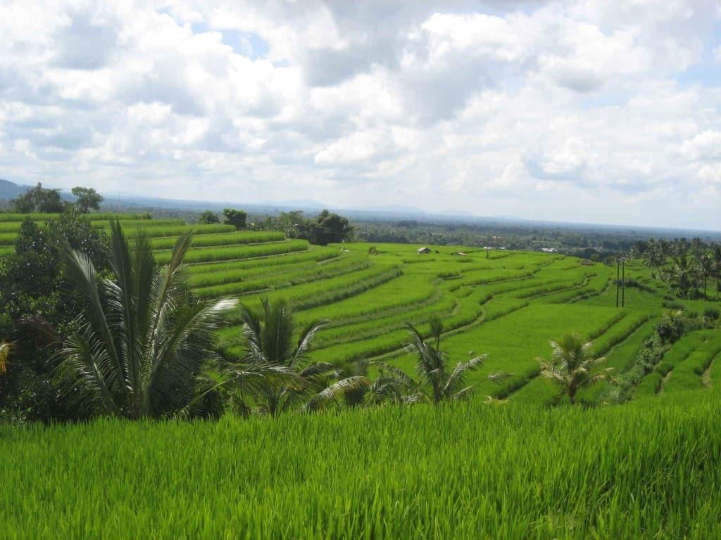 Indonesia Bali Rice Fields